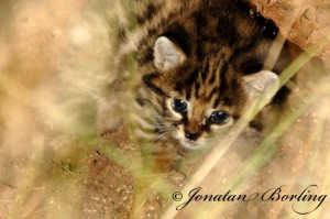 ss2011-03-24-Ericas-kitten-ed1