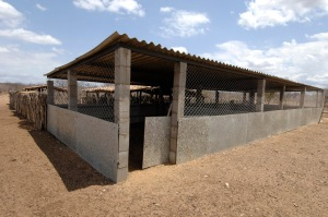 This is one of the carnivore-proof night pens that Claudia's team has helped to build.