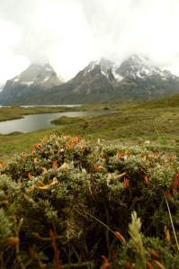 Towers of the Paine, along with lake Nordenskjöld, in Torres del Paine National Park.