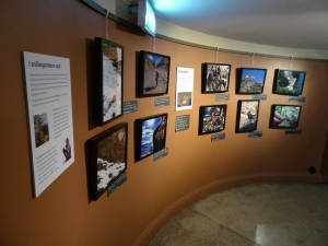 The exhibition can be seen in Biotopia since May.