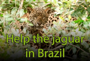 s2015-11-04-jaguar19-design3